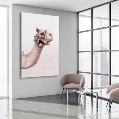 Bohemian Camel