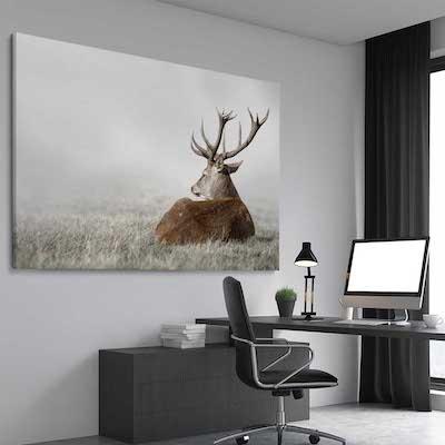 Deer Solitude